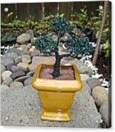 Bonsai Tree Medium Square Golden Vase Acrylic Print