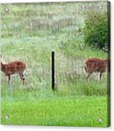 Bookend Twin Bucks Acrylic Print