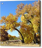 Bosque Fall Acrylic Print