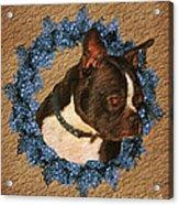 Boston Terrier Love Acrylic Print