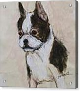 Boston Terrier Puppy Love Acrylic Print