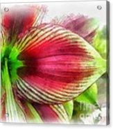 Botanical 01 Acrylic Print