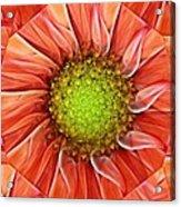 Botanical Swirl Acrylic Print