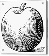Botany: Apple Acrylic Print