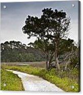 Botany Bay Pathway Tree Acrylic Print