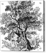 Botany: Oak Tree Acrylic Print