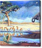 Botswana Watering Hole Acrylic Print