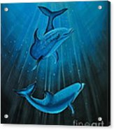 Bottle-nose Dolphins Acrylic Print