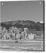Boulder County Colorado Front Range Panorama With Horses Bw Acrylic Print