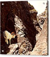 Boulder Fossile Expedition Acrylic Print
