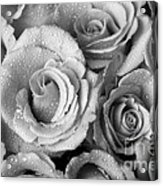 Bouquet Of Roses With Water Drops In Black And White Acrylic Print