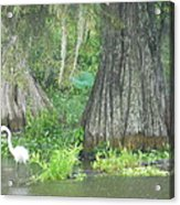 Bow Legged Egret Acrylic Print
