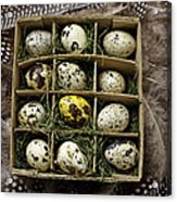 Box Of Quail Eggs Acrylic Print