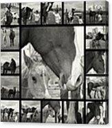 Boy Meets Horse Acrylic Print