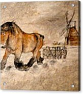 Brabant Moves Out While The Sheep Stand Watching Acrylic Print