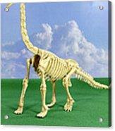 Brachiosaurus Dinosaur Skeleton Acrylic Print
