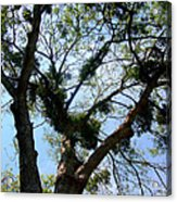 Branched Out Acrylic Print