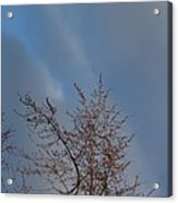 Branches Against A Cloudy Sky Acrylic Print