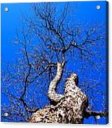 Branches In The Sky Acrylic Print
