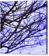 Branches In Winter Acrylic Print