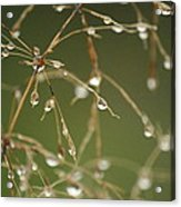 Branches Of Dew Acrylic Print