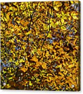 Branches Of Gold Acrylic Print