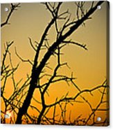 Branches Reaching The Sunset Acrylic Print