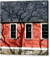 Branching Out Acrylic Print by Mark J Seefeldt