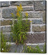 Brick Wall Flowers Acrylic Print