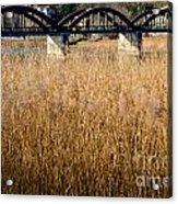 Bridge And Pampas Grass Acrylic Print