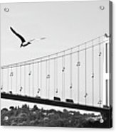 Bridge And Seagull, Bosphorus, Istanbul, Turkey Acrylic Print
