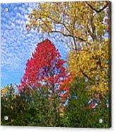 Bright Autumn Color Acrylic Print