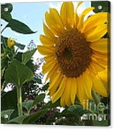 Bright Day Acrylic Print