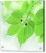 Bright Green Leaves Acrylic Print