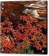 Bright Leaves At Swift River Acrylic Print