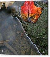 Bright Red Leaf Near A Stream Acrylic Print by Chris Hill