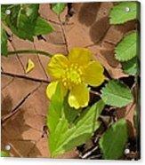 Bright Spring Acrylic Print