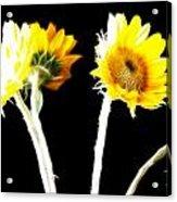 Brighten Your Day Acrylic Print