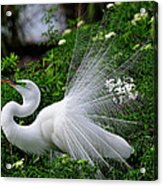 Brilliant Feathers Acrylic Print