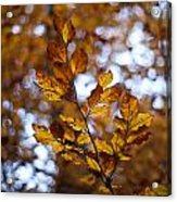 Brilliant Leaves Acrylic Print