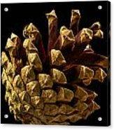 Close Up Of Pinecone Acrylic Print