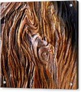 Bristlecone Pine Grain Acrylic Print
