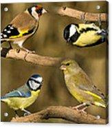 British Garden Birds Acrylic Print