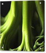 Broccoli Abstract Acrylic Print