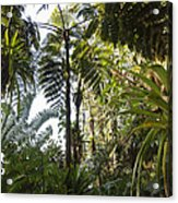 Bromeliad And Tree Ferns  Acrylic Print by Cyril Ruoso