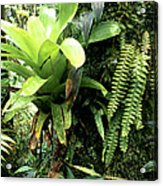 Bromeliad On Tree Trunk El Yunque National Forest Acrylic Print
