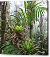 Bromeliads And Tree Ferns  Acrylic Print by Cyril Ruoso