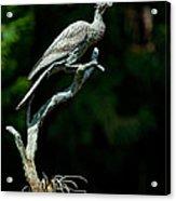 Bronze Cormorant Acrylic Print