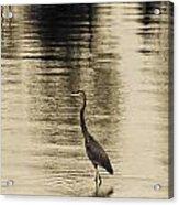 Bronze Lake Acrylic Print