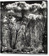 Brook Lake In The West Hylebos Wetlands Acrylic Print